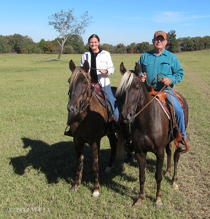 Vern and Shirely live nearby and enjoy riding their Rocky Mountain horses with their riding club, Trail Gaiters and Friends, at Trace Trails.