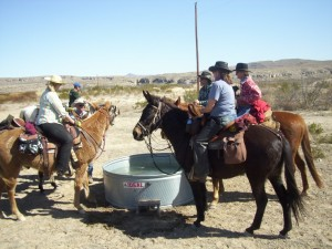 Gathering at the water trough.