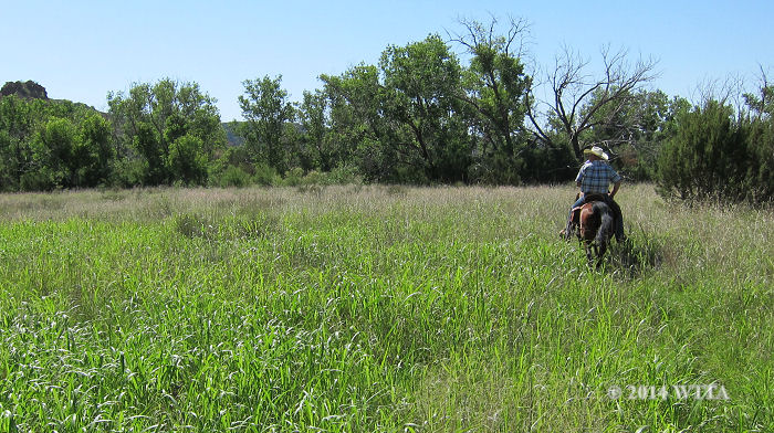 Open grass meadow along the southeastern Equestrian Trail at Palo Duro Canyon.