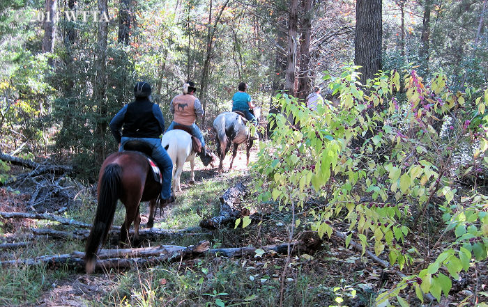 Riding clubs NETASA and Trail Gaiters and Friends ride through a forest trail in Athens, TX.