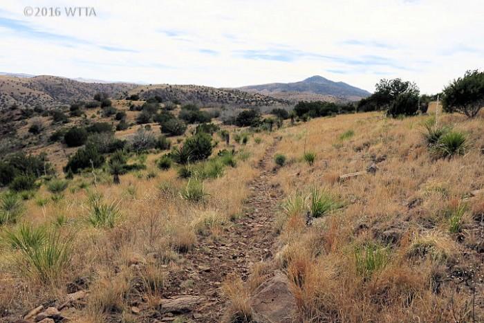 trail new